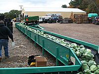 Cabbage Unload Conveyer