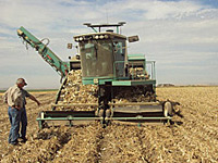Custom Self-Propelled Harvesters in the Onion Field