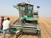 Harvester in the Onion Field